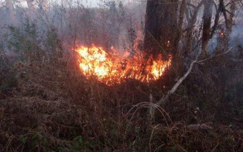 Incendios en Rosario-Entre Ríos: La prefectura identificó a 7 sospechosos, 2 de los cuales poseen antecedentes judiciales